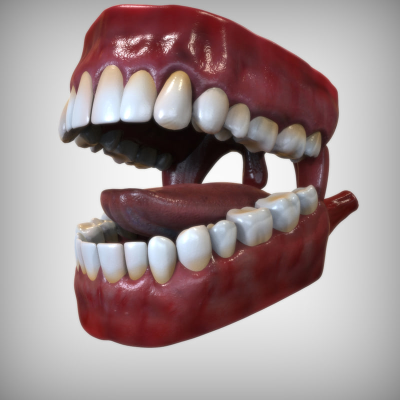 3d model mouth anatomy