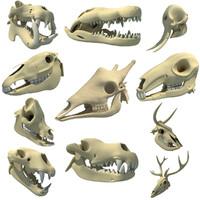 3d animal skull model