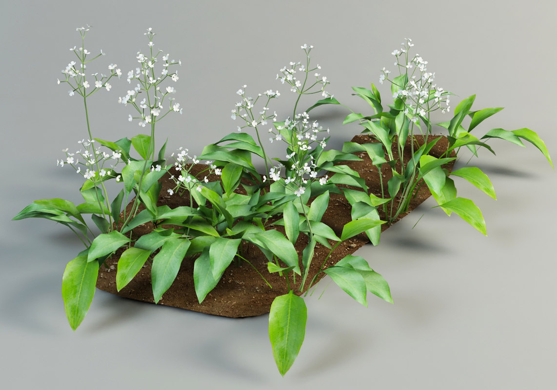 alisma plantago mad-dog obj