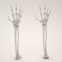 max skeletal hand