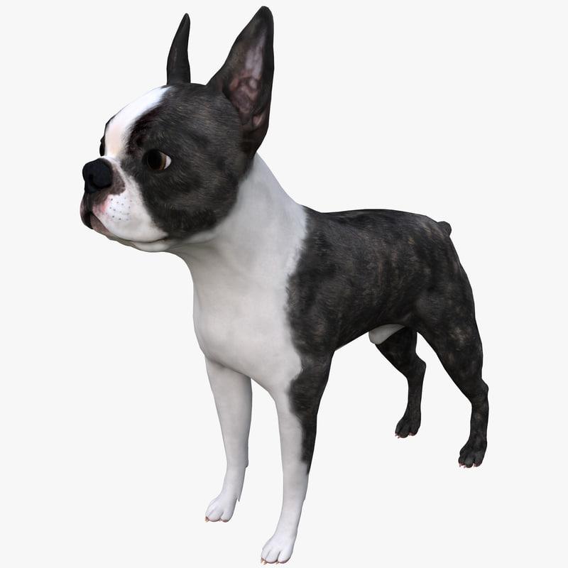 3ds max boston terrier