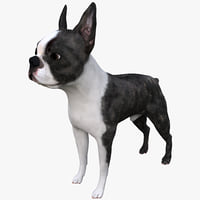 3ds max boston terrier