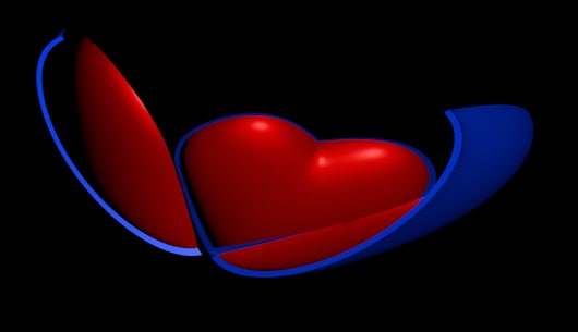 heart shell 3d model