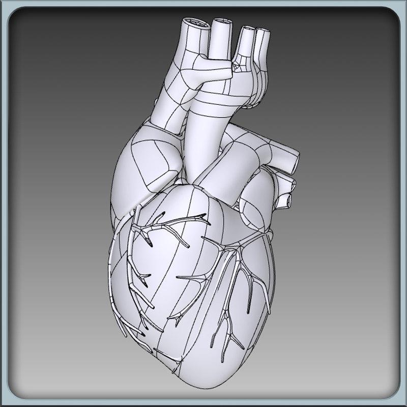 igs human heart 3d model
