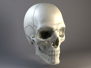 3d bones man skull human