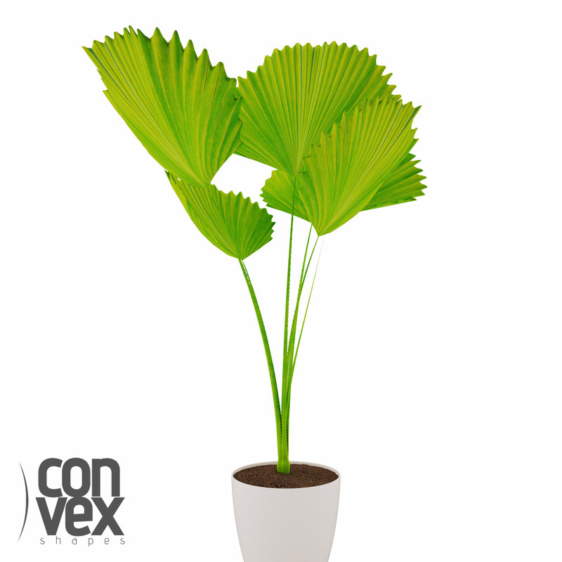 3d model potted plants 09