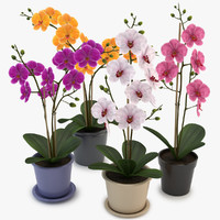 Collection Orchids