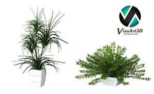 3d plant houseplant model