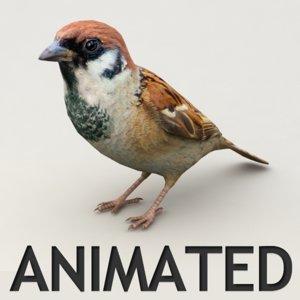 3d model sparrow