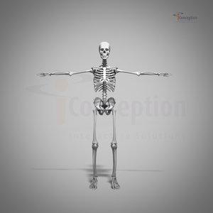 human skeleton heart 3d c4d