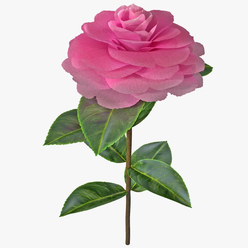 3ds camellia plant