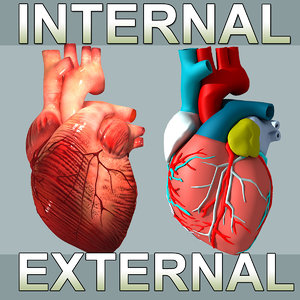 3d heart internal external model
