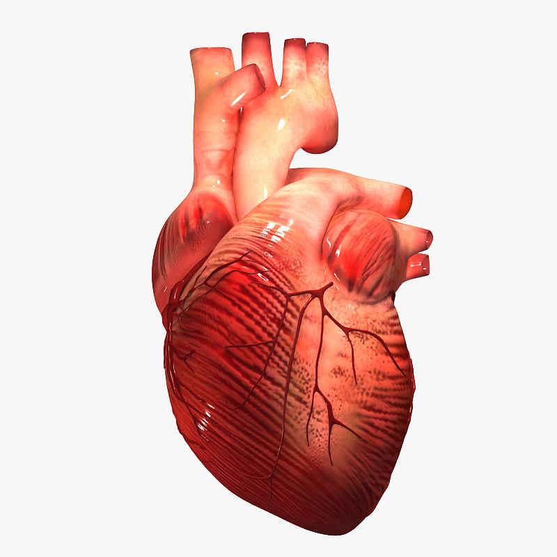 3d Heart Internal External Model