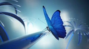 scene butterfly