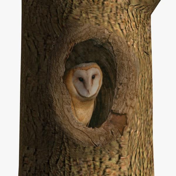 maya owl tree birds ab