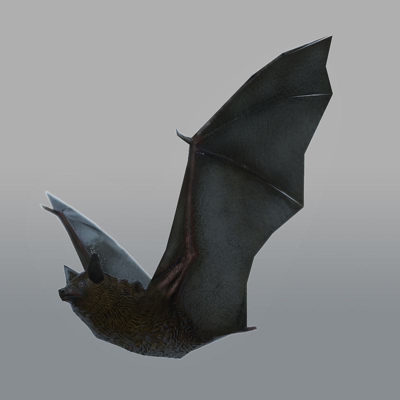 3d model rigged bat animations