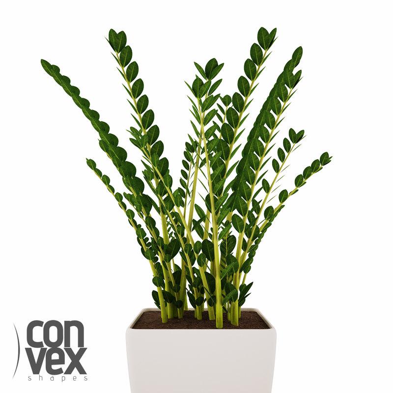 potted plants 08 3d model