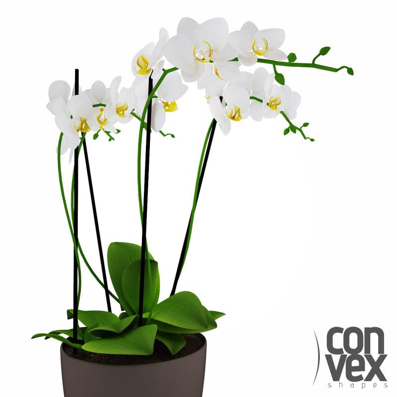 c4d potted plants 15