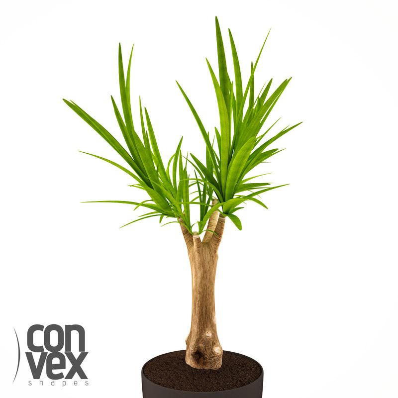 3d potted plants 19 model