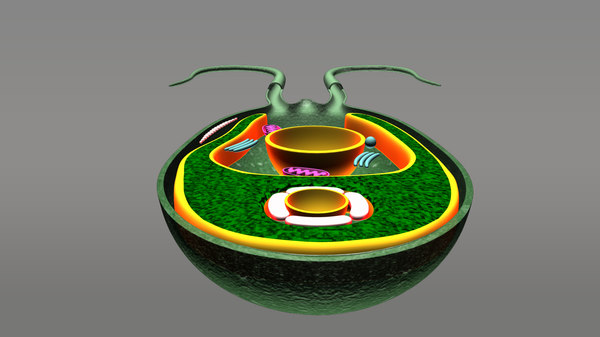 3d chlamydomonas model