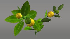obj citrus