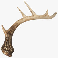 deer antler 2 3d model