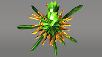leonotis flowering plants 3d model