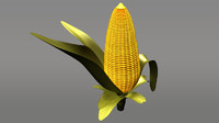 maize corn grain 3d model