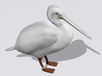 3d model pelican