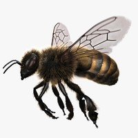 3d model of honey bee rigged animating