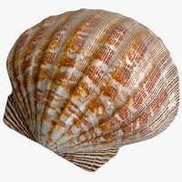 Clam Seashell 2