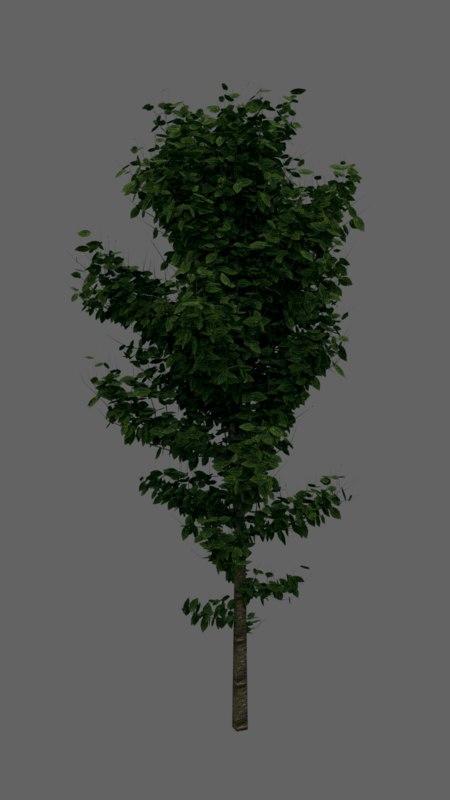 tree leaves obj