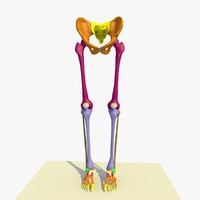 3ds colour legs feet male anatomy
