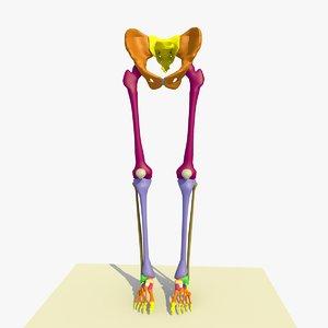 3ds colour legs feet male anatomy