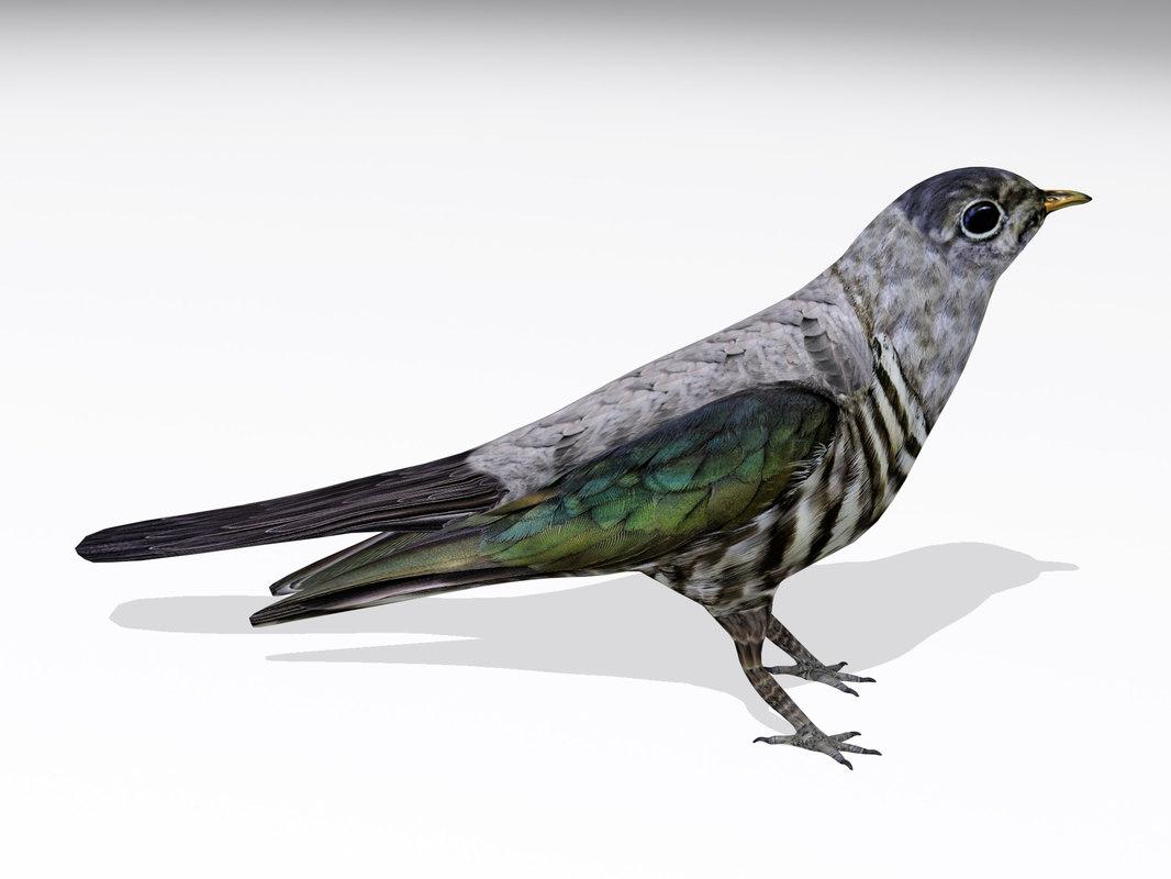 3d model cuckoo