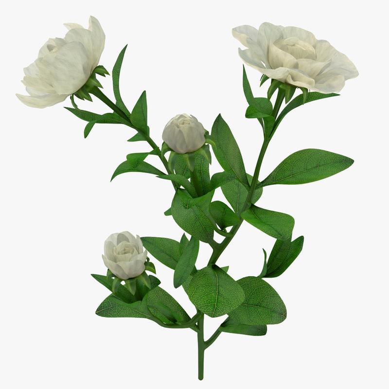 gardenia branch max