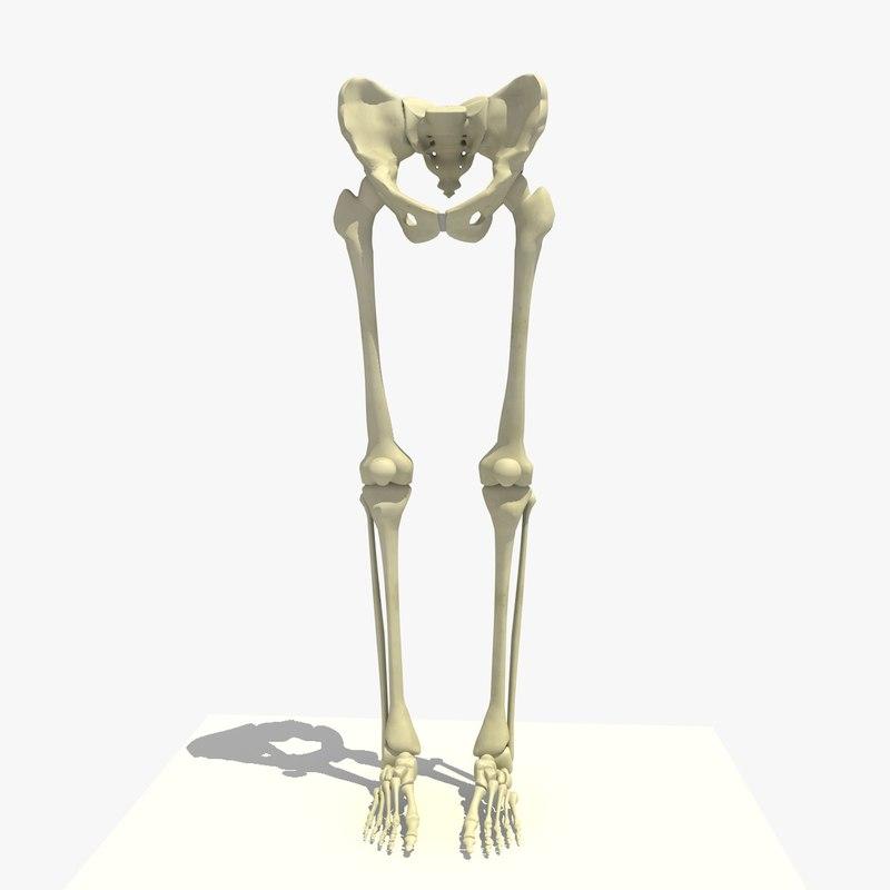 3d Legs Feet Male Skeleton