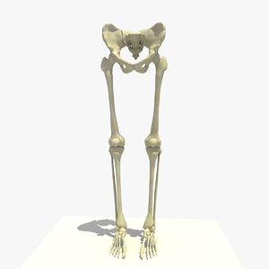 3d legs feet male skeleton