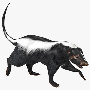 3d skunk pose 2