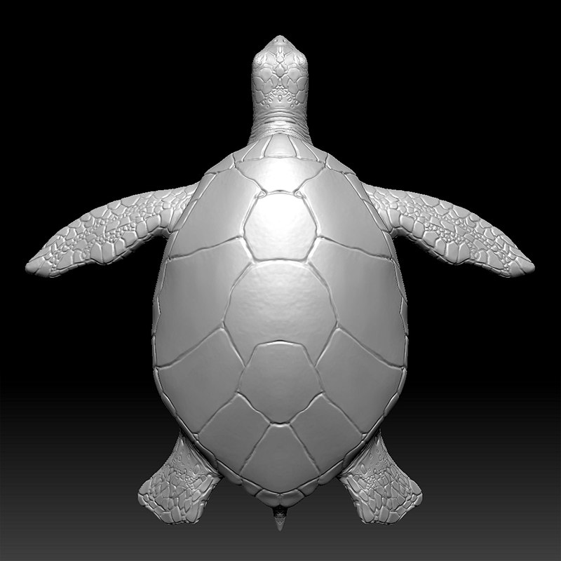 3ds sea turtle zbrush