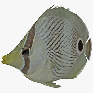 3d max butterfly fish