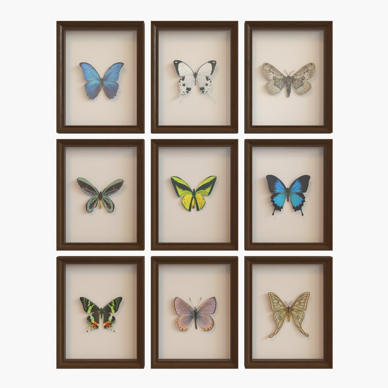 3d model framed butterfly