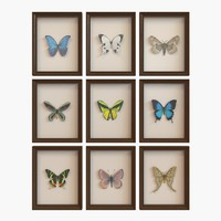 Interior Decor - Framed Butterfly  V2