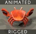 Fiddler Crab 3D models