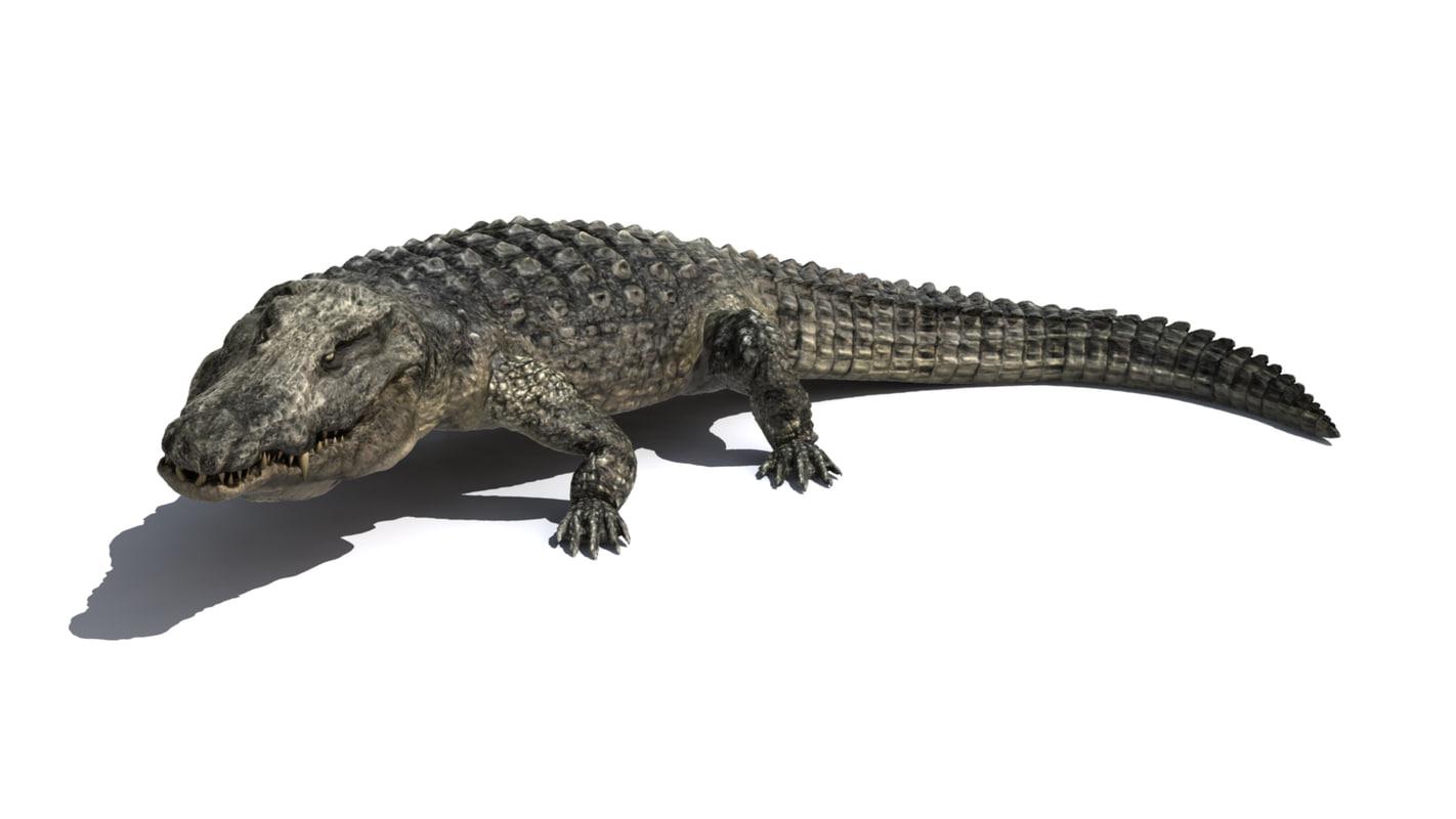 3d realistic crocodile model