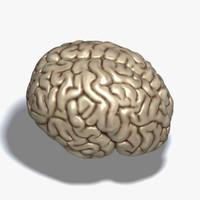cerebrum human brain 3d max