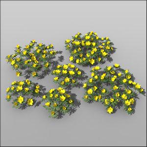 c4d winter aconite flower