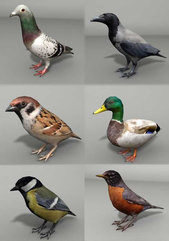 3d model of birds hooded mallard