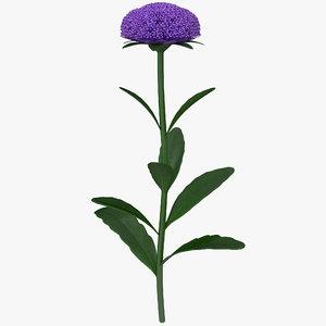 3d model aster flower