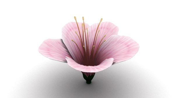 cherry blossom obj
